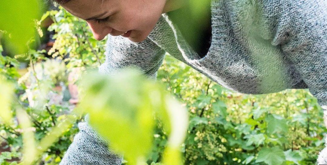 Fűszeres kortyok – Beh Mariann kézműves teái már kaphatók webáruházunkban (forrás:www.borsmenta.hu)